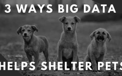 Saving Us Money and Saving Our Pets: 3 Ways Big Data Helps Shelter Animals